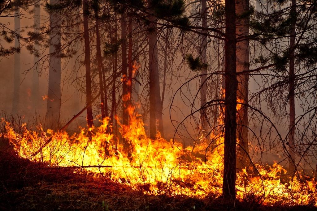Действия во время возникновения природного пожара